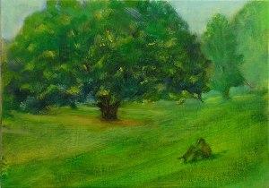 oak tree in Dimond Park