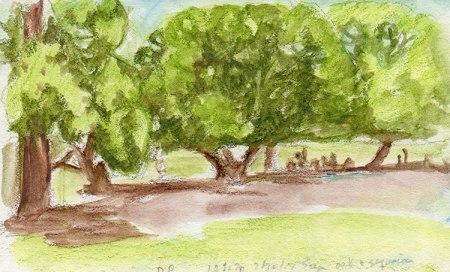 oaks in Dimond park