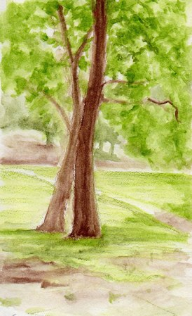 two trees in Dimond park